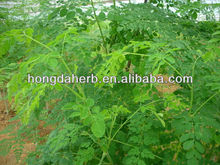 Very Hot Selling Moringa Leaf Powder Extract