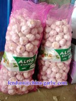 New crop China garlic price 2016