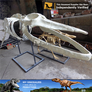 MY DINO-O07 Nature museum fiberglass animal skeleton for sale