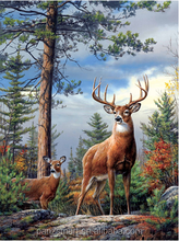 3D Dimensional Deer Hunting Picture Lenticular Effect 3D Picture of Animals