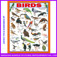 Factory price high quality english language birds table charts kids toys