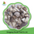 Chinese Frozen shiitake Mushroom Spawn With High Quality On Sale