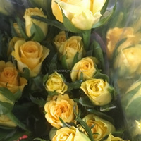 Wide variety sprayed rose decoration flowers yellow rose flowers