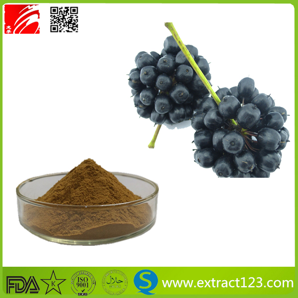 Manufacturer Supply Siberian Ginseng Root Extract Powder