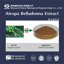 Plant extract scopolamine 1% Belladonna Herb P.E powder