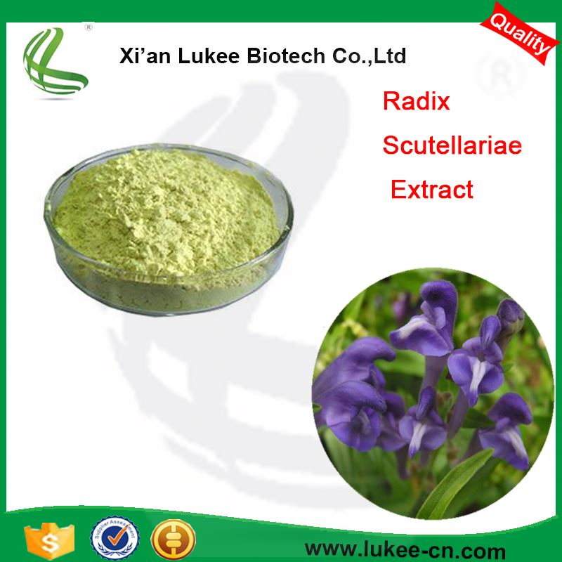 Supply Scutellaria Baicalensis Root Extract Baicalin 95%