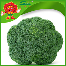 High quality hotbed Cheapest Broccoli Florets