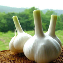 Hot Selling Pure Natural Garlic Extract Powder allicin powder