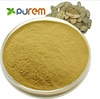 PUREM 100% Natural anti-aging Astragalus Extract Astragalus Root Extract 10-98% Astragaloside IV