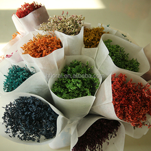 Alibaba china hot selling dried limoniun preserved flowers long lasting forget-me-not Statice limonium flower