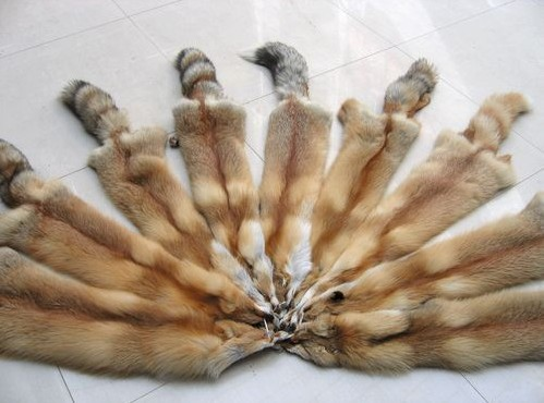 Silverfox skins blue raw fox skins Natural Color Raw Red Fox Fur Skin/Pelt For Sale