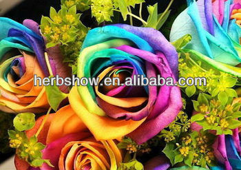 Rose flower seeds rainbow rose seeds all colors for for Growing rainbow roses from seeds