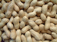 raw peanuts in shell