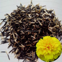 Tagetes patula flower seeds