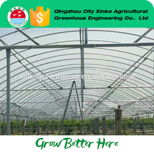 Economic and Efficient industrial size hot sale green house plastic film