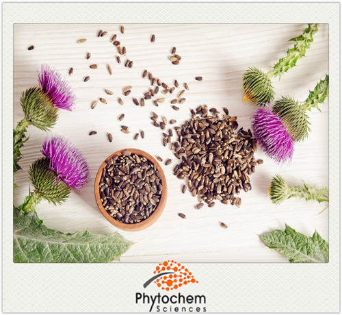 Professional Manufacture milk thistle p.e.for Improve insulin resistance