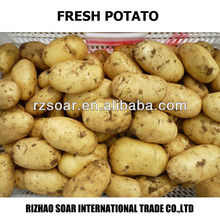 2014 new crop fresh potato for sale