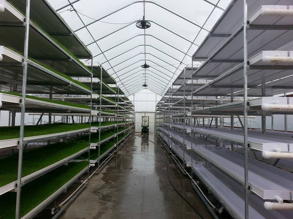 Hydroponics Cattle Feed Fodder System Buy Modern