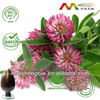 NSF-GMP Audited Best Natural Red Clover Extract Powder, Red Clover Extract