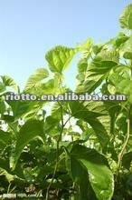 Free Sample white mulberry leaf extract powder 1%~98% 1-dnj