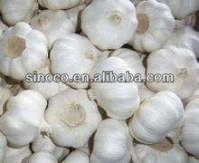 fresh red garlic fresh garlic in cold storage 10KG Ctn