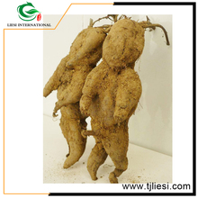 china herbal medicine raw chinese herb fo ti crude herbs/crude medicine/he shou wu