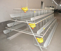 galvanized 3 layer chicken cage with soncap certificate