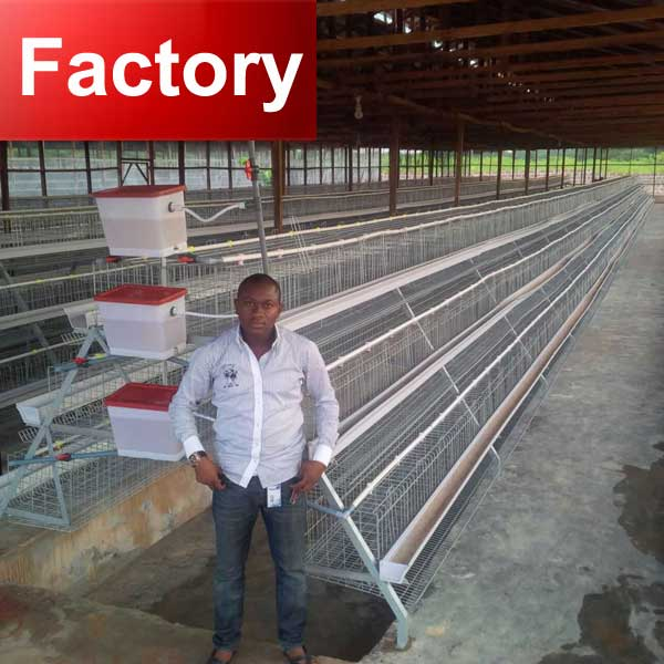 Quality A frame stock types of poultry house