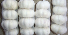 Outstanding supplier of White Garlics - Ad us on Sky/pe ( agric.farm )