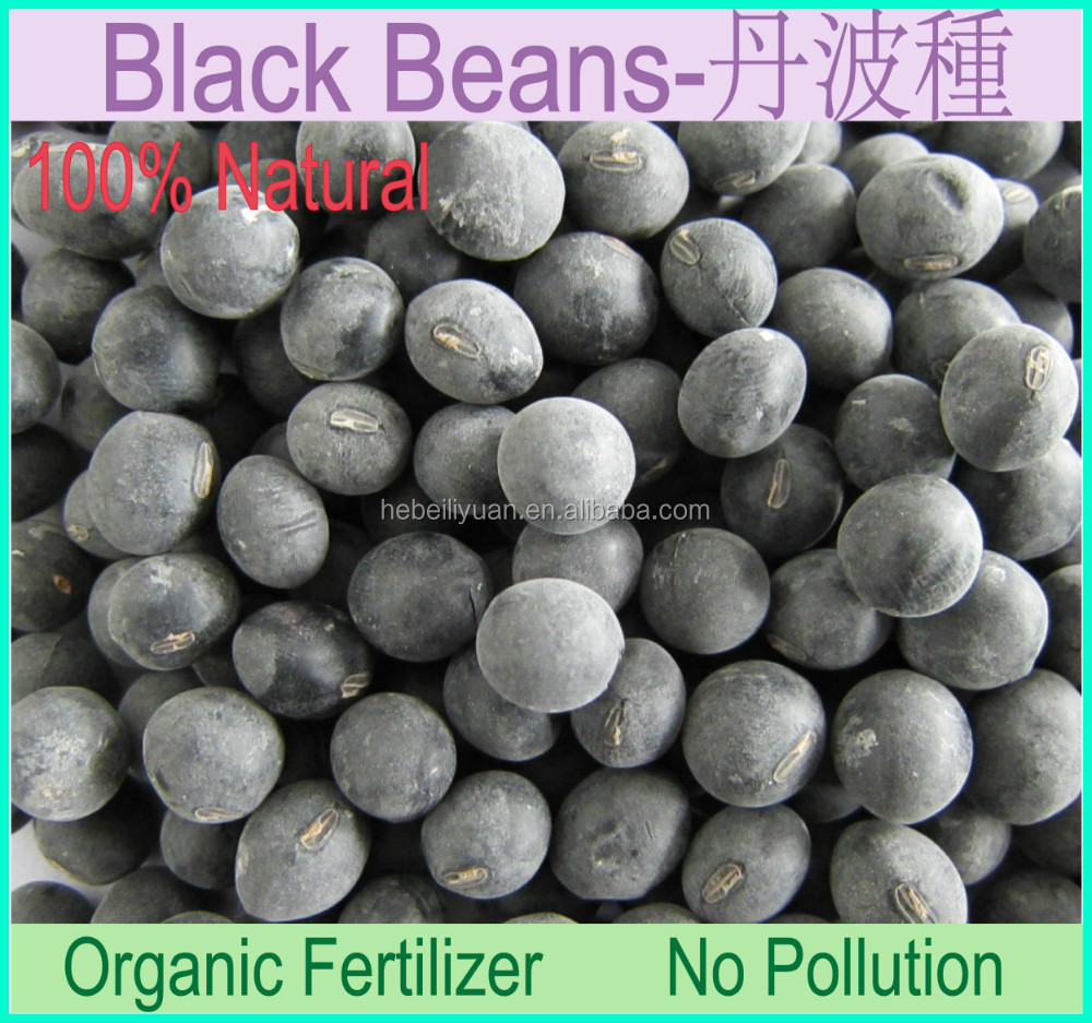 black soybeans with yellow kernel
