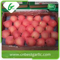 ISO certification high quality fresh green sweet gala apple