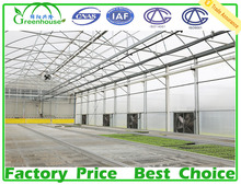 Wide Single Span Poly Tunnel Commercial Film Greenhouse
