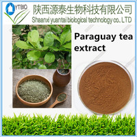 HOT SALE natural Ilex paraguariensis/ParaguayTea plant extract/Yerba Mate Extract powder