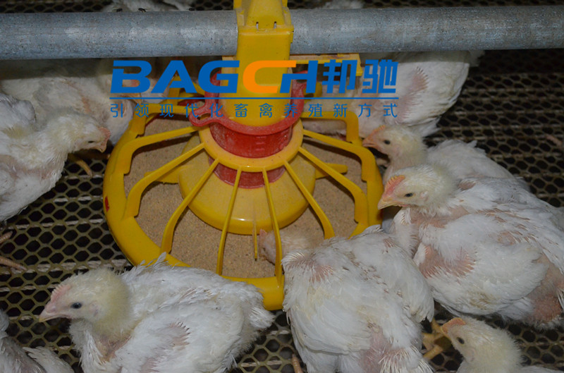 Chicken Farm Project Poultry Farming Equipment for Sale