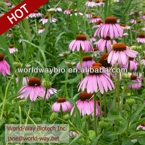 Antimicrobial from Echinacea Herb P.E