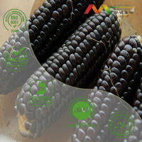 Purple Corn Extract 25% anthocyanins
