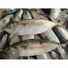 AAA GRADE PACIFIC, HORSE, SPANISH,MACKEREL FROZEN FISHES. Include your contact email address for a fast reply back.