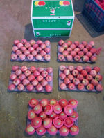Fresh shanxi papper bagged qinguan apple
