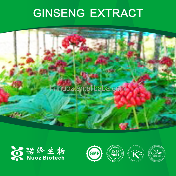 Natural herbal extract korean red ginseng tea P.E.