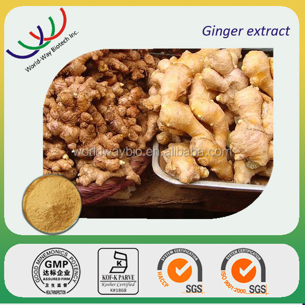 Free sample factory supply 100% pure liquid ginger extract/ ginger herbal plant extract powder