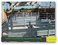 cattle weighing system--for slaugther line