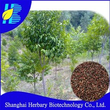 Hot sale tropical tree seeds gaharu seeds for planting