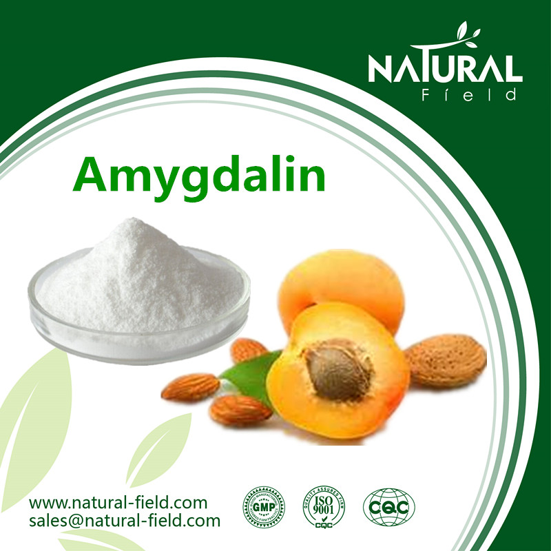 Best Sells Product Amygdalin, Vitamin b 17, Apricot kernel Extract