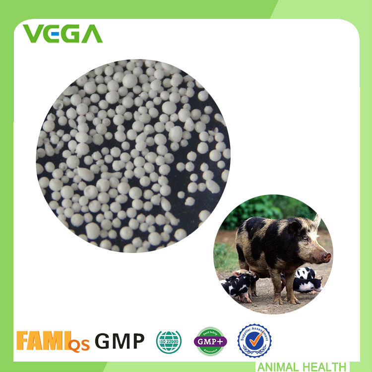Sodium Butyrate GMP & FAMI-QS Yellow Maize For Poultry Feed