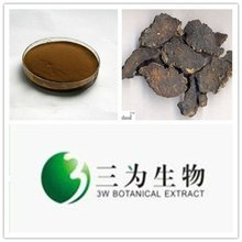 Traditional Herb Plant Radix Rehmanniae Preparata Extract from GMP Manufacturer