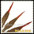 25-30cm Natural Red Tips Feather Pheasant Golden Tail