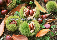 Chinese fresh chestnut 40-50 30-40 40-60pcs per kg