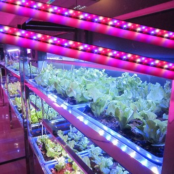 Greenhouse Projects Used MarsHydro LED Lights DC12V IP65 full spectrum hydroponic greenhouse LED grow light bar 23/46/92/108W