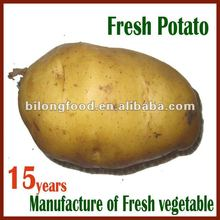 2017 fresh Holland potato from china new farm