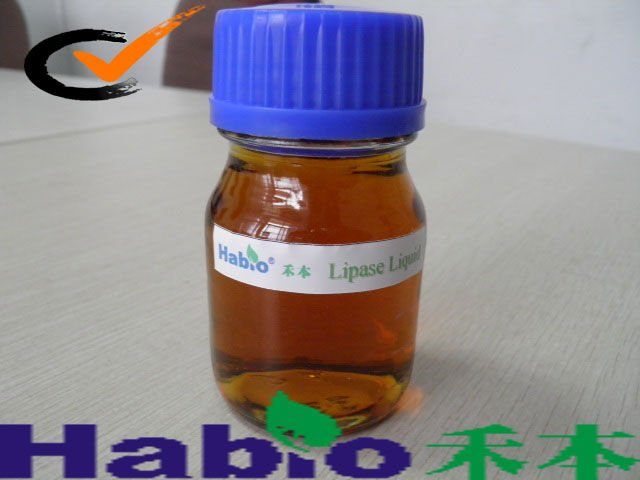 New!!! Sell Biodiesel Agent(Lipase)